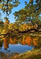fall, pond, trees