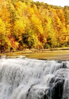 fall, waterfall, forest