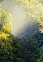 falls, thickets, jungle