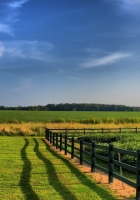 fence, fields, greens