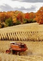 field, combine, crop