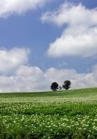 field, economy, trees