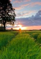 field, grass, summer