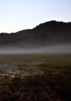 field, gray, bog