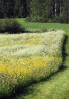 field, herbs, flowers