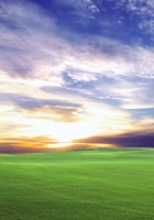 field, meadow, decline