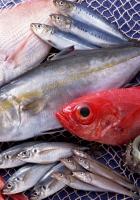 fish, seafood, variety