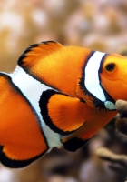 fish, underwater, color