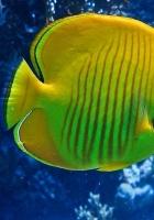 fish, underwater, swimming