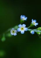 flower, background, green