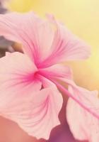 flower, branch, bright