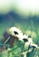 flower, grass, glare