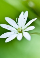 flower, grass, petals