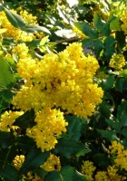 flower, shrub, spring
