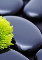 flower, stone, petals
