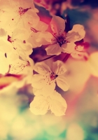 flower, tree, blossoms