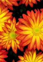 flowers, bright, petals