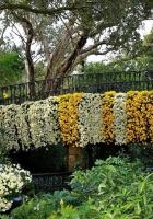 flowers, flowerbed, garden