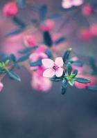 flowers, glare, light