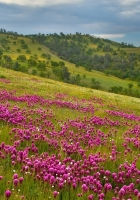 flowers, meadow, grass