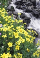 flowers, mountain, river