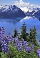 flowers, mountains, lake