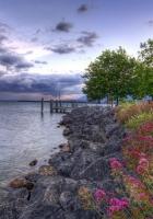 flowers, stones, coast