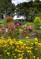 flowers, trees, garden