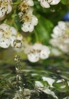 flowers, water, drops