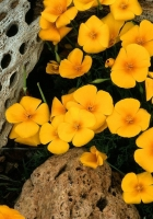 flowers, yellow, small