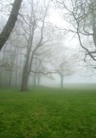 fog, grass, trees