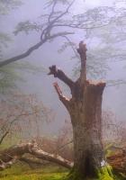 forest, fog, haze