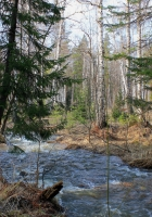 forest, trees, river
