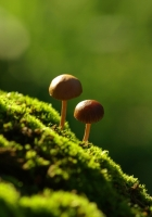 fungi, moss, grass