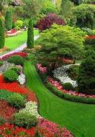 garden, footpaths, flowers