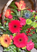 gerbera, chrysanthemums, roses