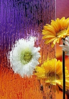 gerbera, flower, vase