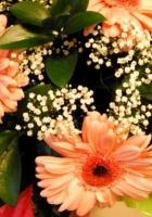 gerbera, flowers, gypsophila