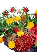 gerbera, physalis, chrysanthemums