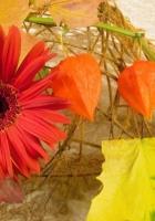 gerbera, physalis, leaves