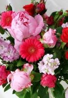 gerbera, roses, peonies