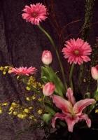 gerberas, tulips, flowers