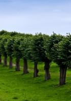 germany, garden, trees