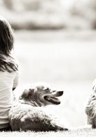 girl, dog, nature