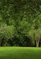 glade, wood, green