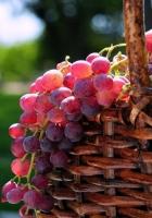 grapes, basket, crop