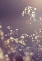grass, branch, plants