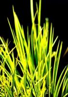 grass, contrast, white