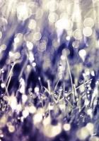 grass, glare, mildew