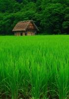 grass, lawn, beautiful